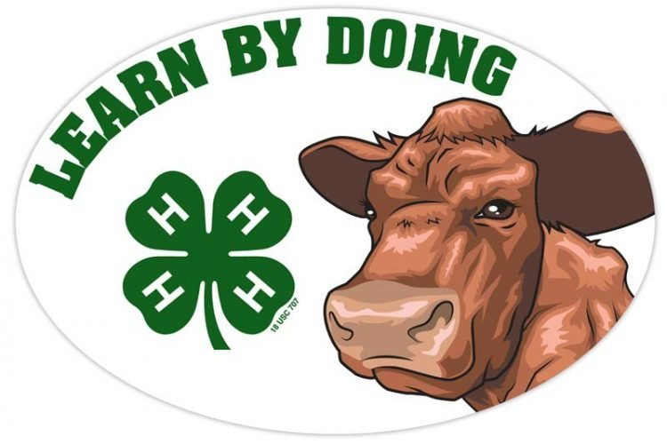 4-h refrigerator magnet - beef cattle