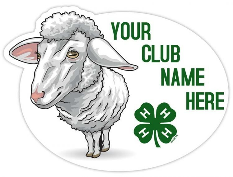 4-h sticker - sheep