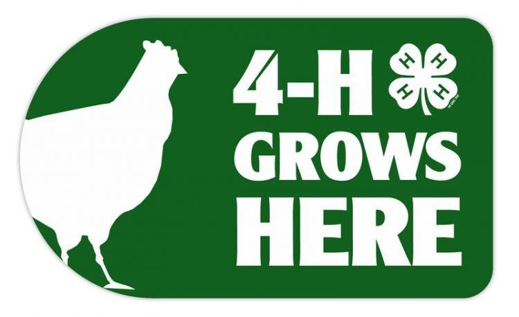 4-h sticker - chicken