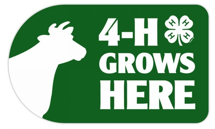 4-h sticker - cow