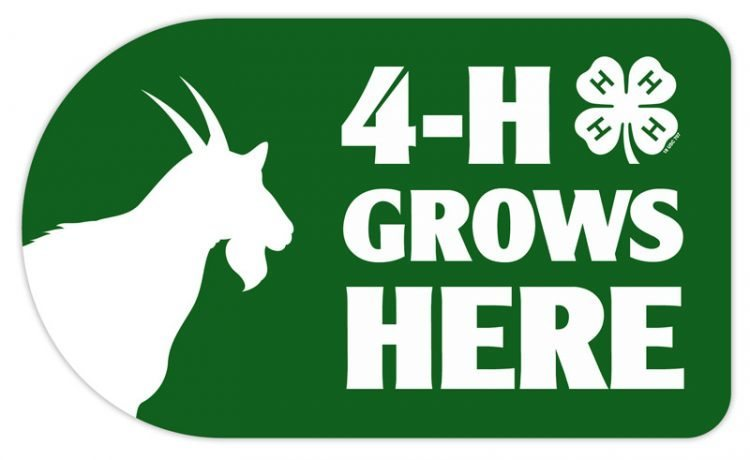 4-h sticker - goat